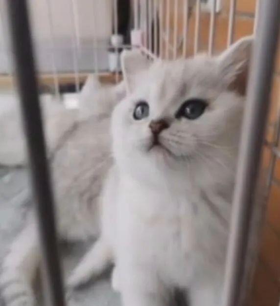 一家七口感染新冠,猫咪独自守家40天,还生了4只小猫! 网友:猫坚强