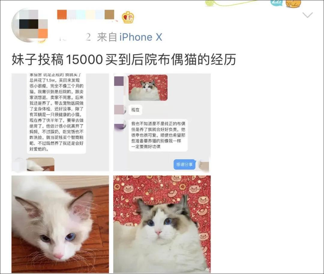 在网上花1万多买的缅因猫,带回家10天就死了