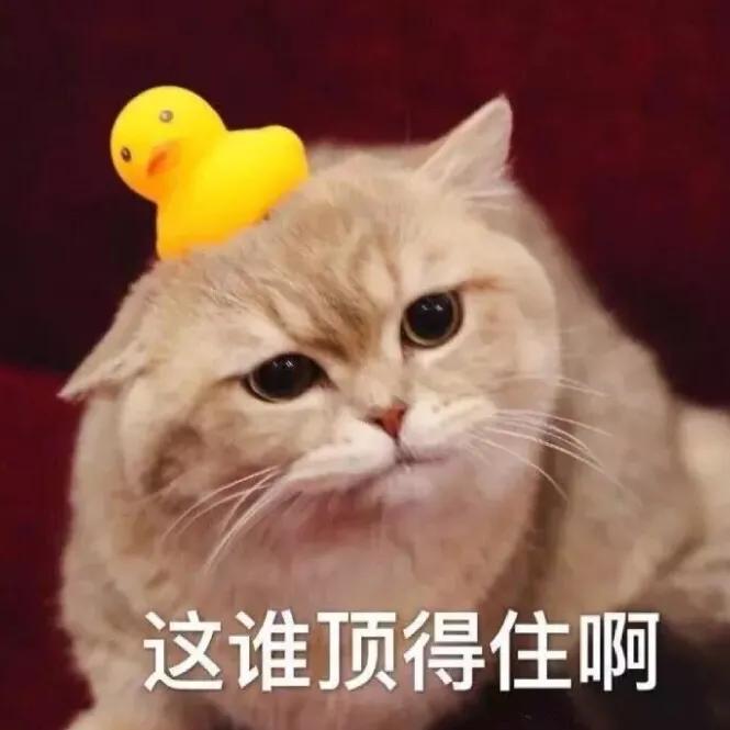 交配这件事,公猫母猫都挺难,因为猫丁丁上有倒刺