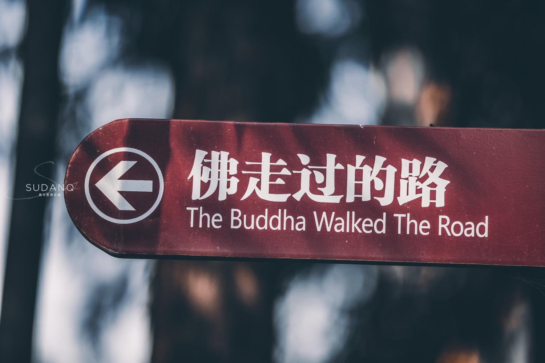 西安这座古寺鲜为人知:西域高僧穿过河西走廊,建立首个译经场