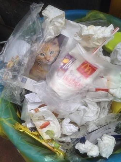 热心网友从垃圾桶里救出一只小橘猫时,空气瞬间凝固了