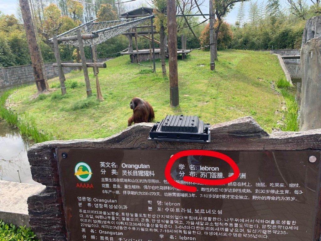涉嫌歧视?上海野生动物园将猩猩学名标注为Lebron