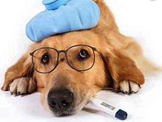 如何把狗狗照顧到老年至7歲犬日常護理上