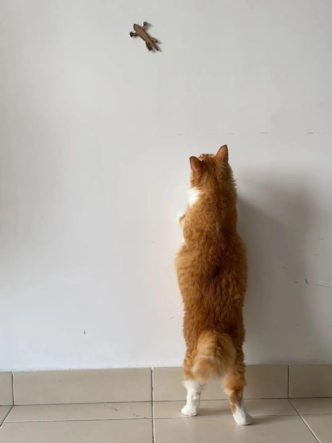 原本我只想耍耍自己家猫,没想到…最后把全网的猫都给骗了!