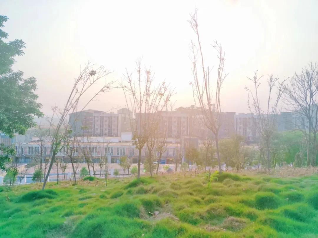 广西城市职业大学:夏至未至,春天与你,皆不可少