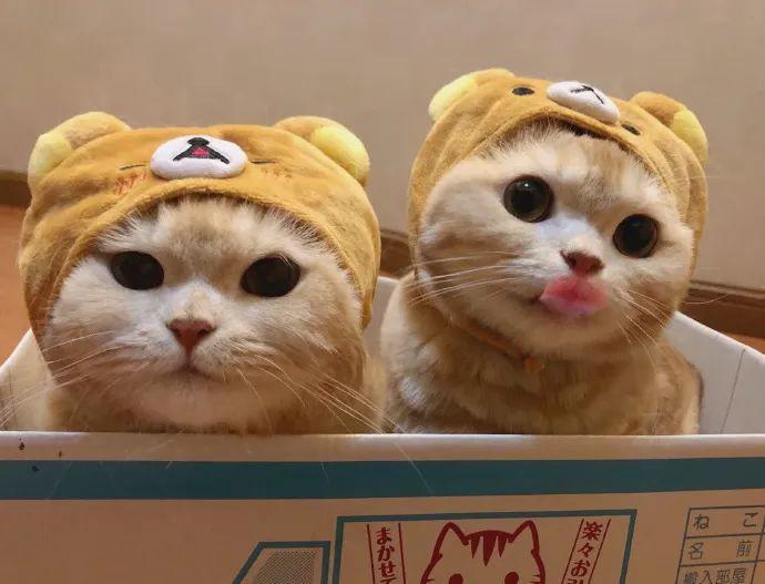 @橘猫沙梨Sally 家的橘猫