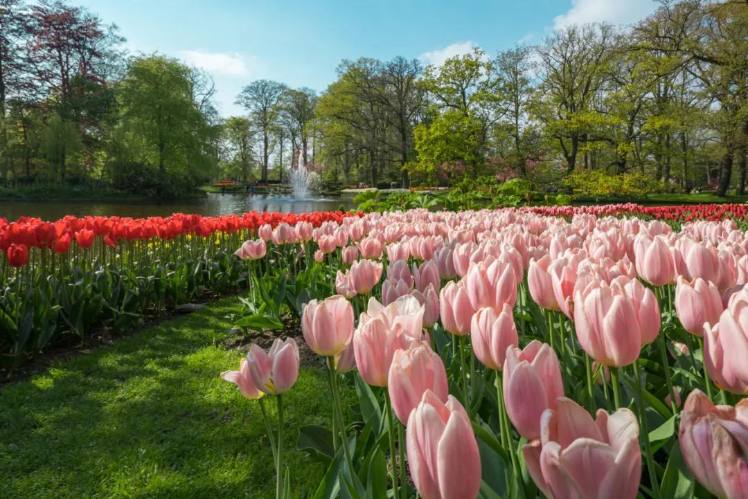 这个时候,全球最美的花园早已经花开成海了