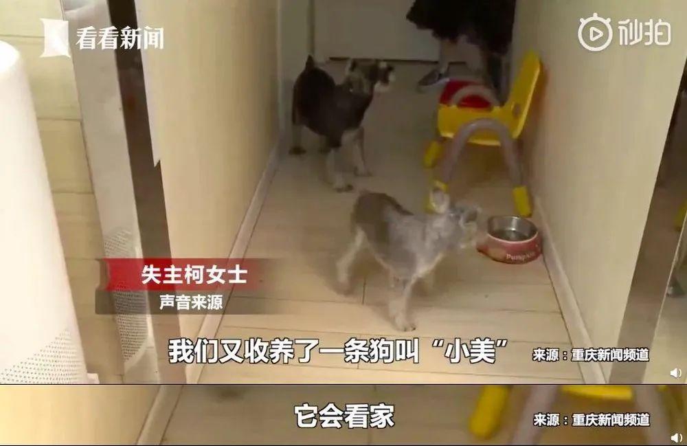 小偷入室盗窃,狗子全程围观:东西你随便拿,别动我就行