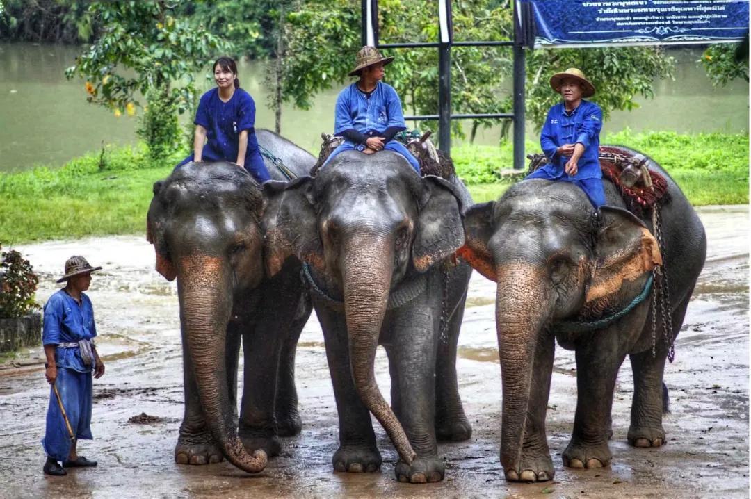 """惊!面对疫情,泰国上千头大象既面临""""挨饿"""",也面临""""失业"""""""