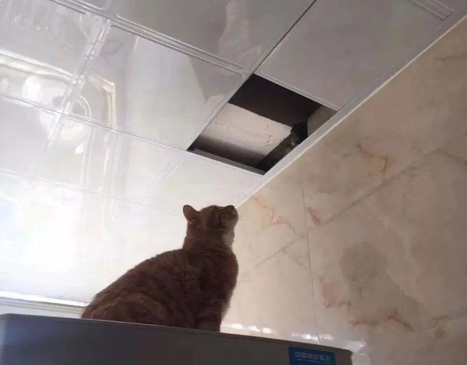"""""""我寻思着一只猫能胖到哪去,直到…我看见了这头猪!"""""""