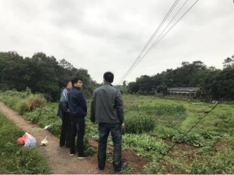 大湾镇四个强化助推早稻扩种超额完成任务