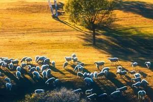 秋日的羊群,冬夜的盛宴