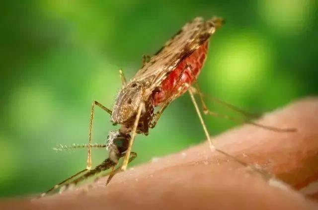 世界上最毒的十大昆虫,夺人性命只需几秒钟(www.souid.com)