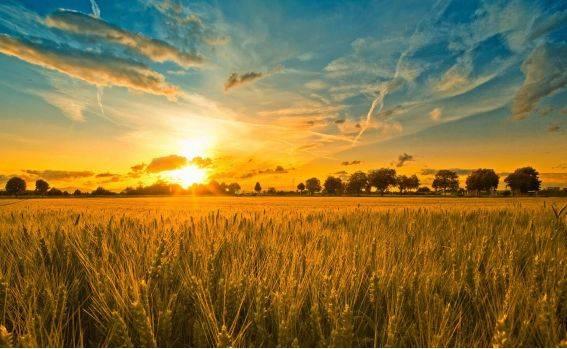 德州牛仔 三农政策:2018农业政策的基本解读