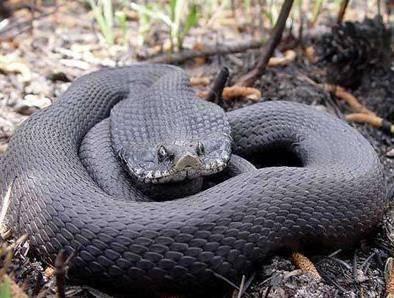 男子發現一條張大嘴巴的蛇,將手指放進它嘴里,蛇的反應把人萌翻。-Dog Time