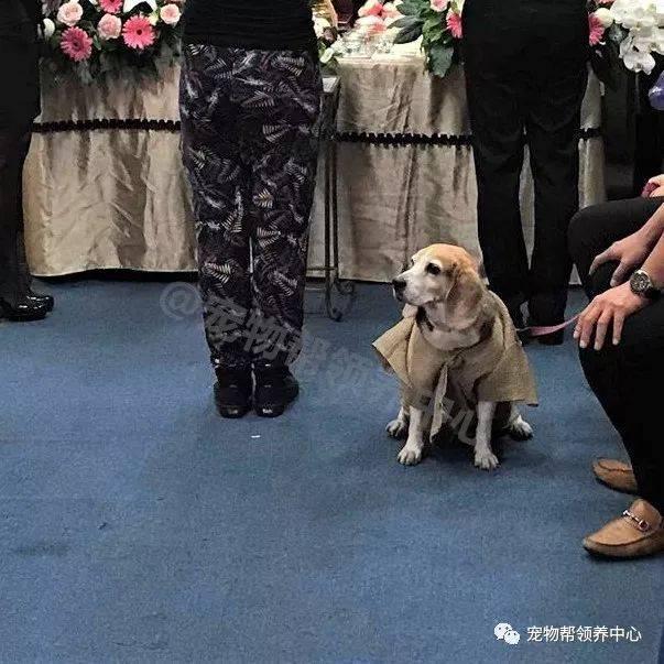 15歲狗狗穿上孝服送主人最後一程,看到它眼眶紅紅,大家都哭了…-Dog Time