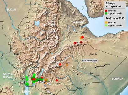 沙漠蝗虫再次袭击埃塞俄比亚,很可能会加剧粮