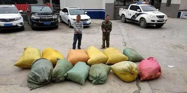 广西凌云县泗城镇这俩,竟然偷了800余斤鸭毛和