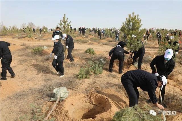 定边县公安局组织青年民警参加义务植树活动