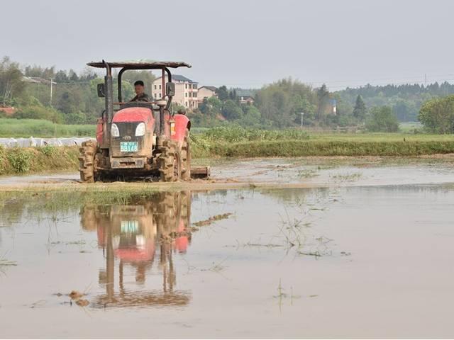 订单农业提高中国农民种粮积极性