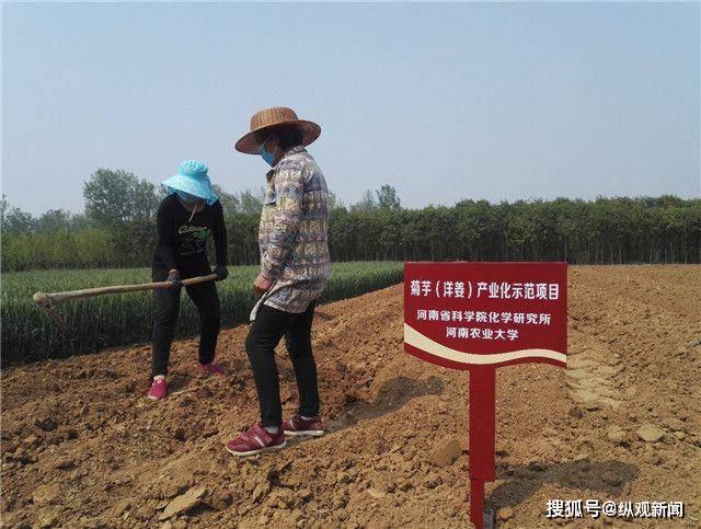 河南省科学院专家、农大博士生深入袁店回族乡汉山村指导洋姜种植