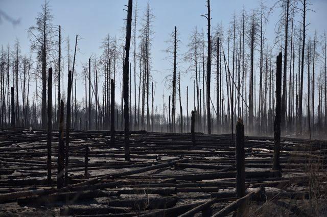 乌克兰切尔诺贝利森林大火火情得到控制