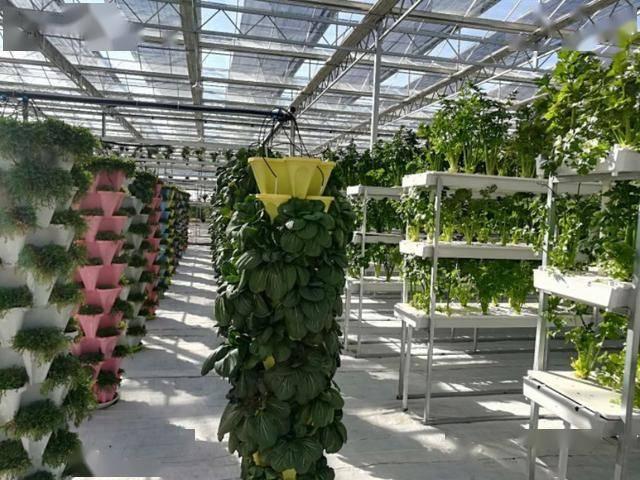 智慧农业索玛花开 亿元产业拔地而起