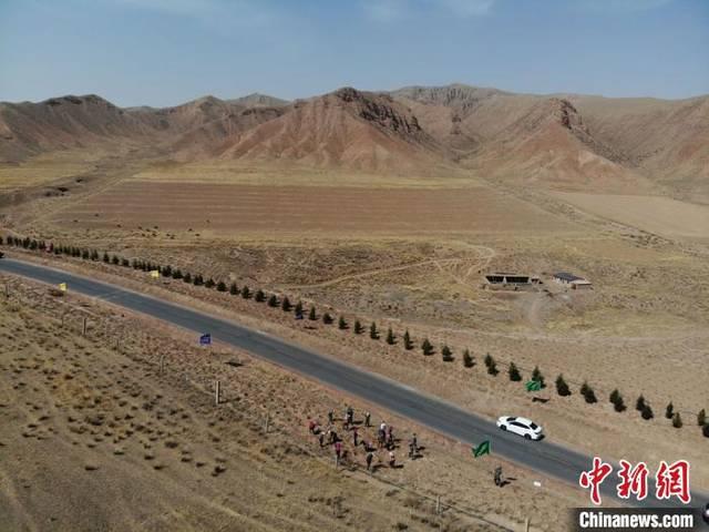 甘肃肃南大规模植树荒原 祁连山下添林也造景