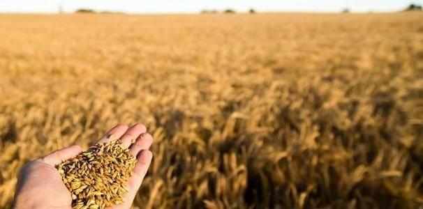 受到非洲蝗虫和全球新冠疫情的影响,中国粮食会不会因此而涨价?