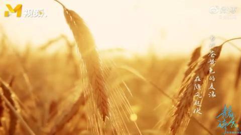《青春诗会》杨洋朗读《当那苍黄色的麦浪在随风起伏》致敬乡村教师