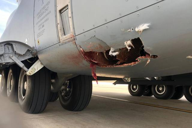西班牙A400M运输机发生撞鸟事故